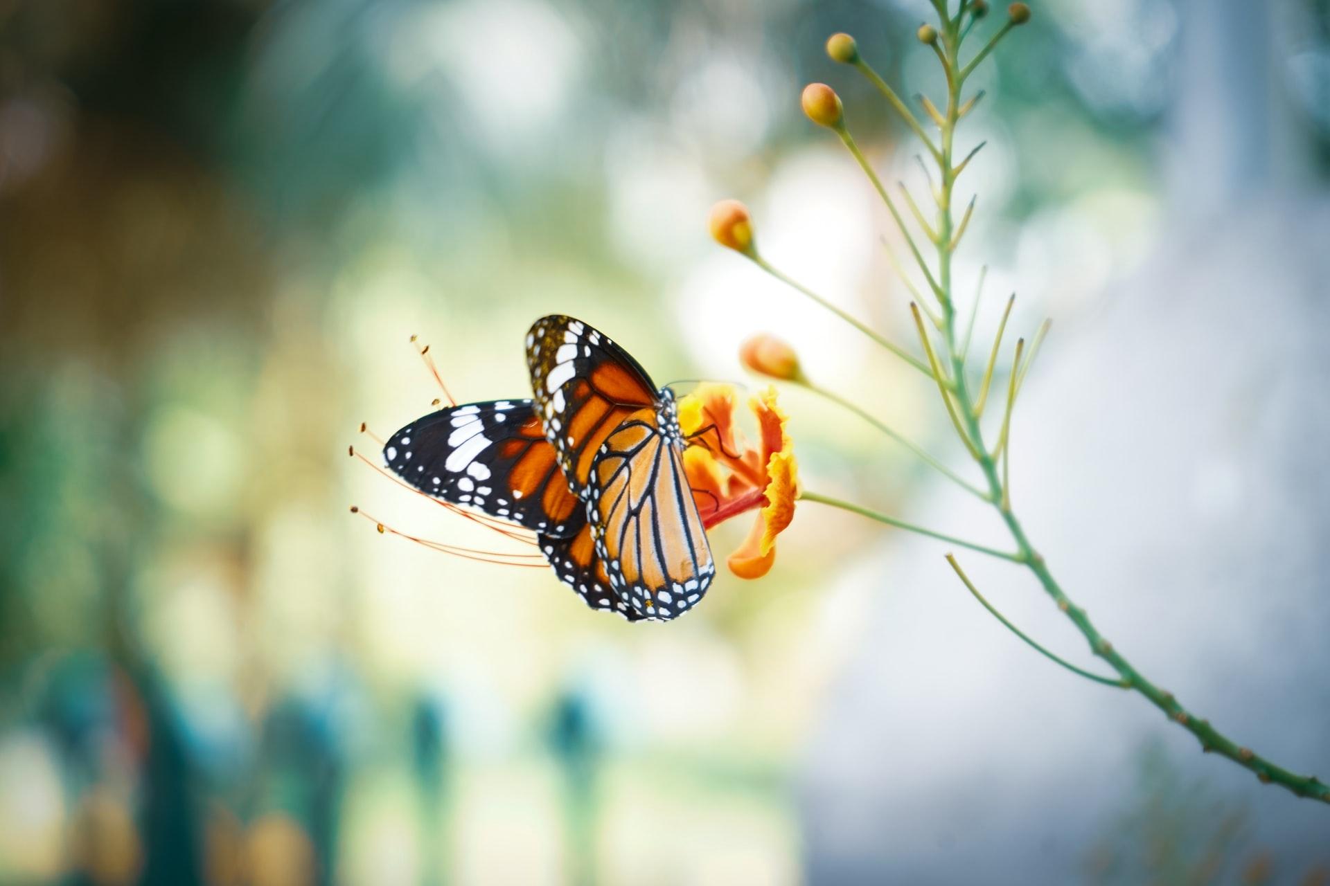 Die Zauberwelt der Schmetterlinge